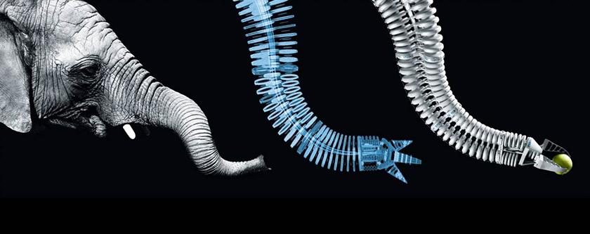 Biomimesi, sostenibilità e innovazione nelle PMI
